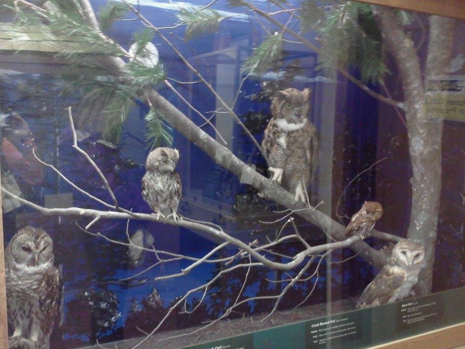 Exhibit Owls The Symbol Of Wisdom And Knowledge Be Active Decatur
