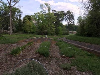 Herbs at Sugar Creek Garden at the Wylde Center in Decatur